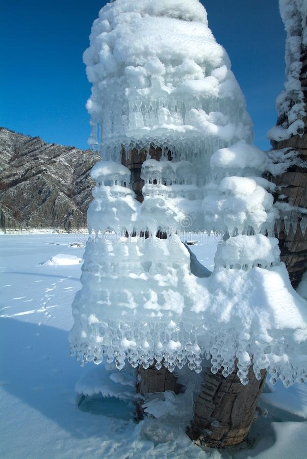 Strange form Icicles on tree at the lake royalty free stock images