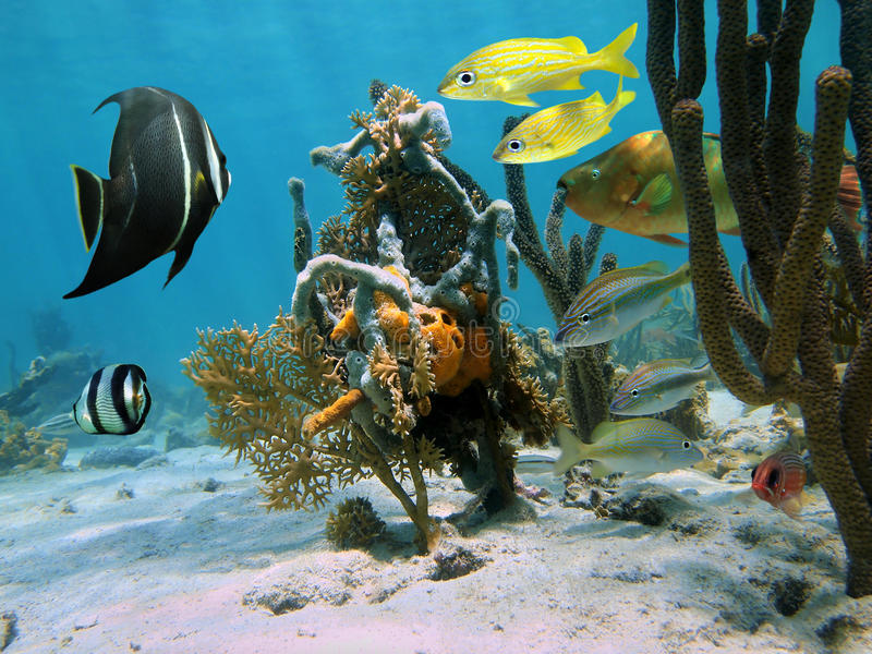 Download Strange Forms Of Sea Life In A Coral Reef Stock Image - Image: 28474211