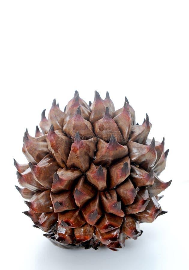 Strange fruit. On white background stock photos