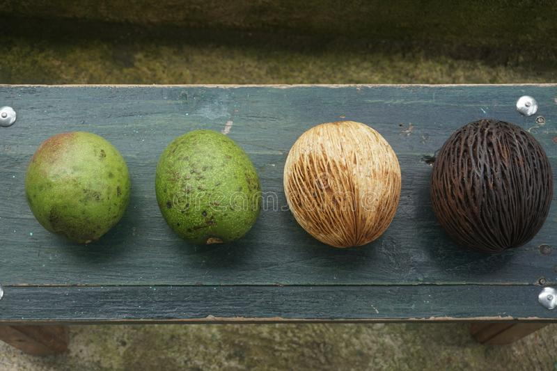 Strange fruit and guava fruit. A strange fruit like a brown coconut and two pieces of guava fruit food fresh orange healthy diet vegetarian sweet organic vitamin royalty free stock photography