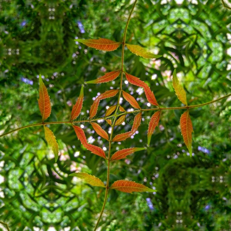 Strange Kaleidoscope Edit mit weißen Blumen lizenzfreies stockbild