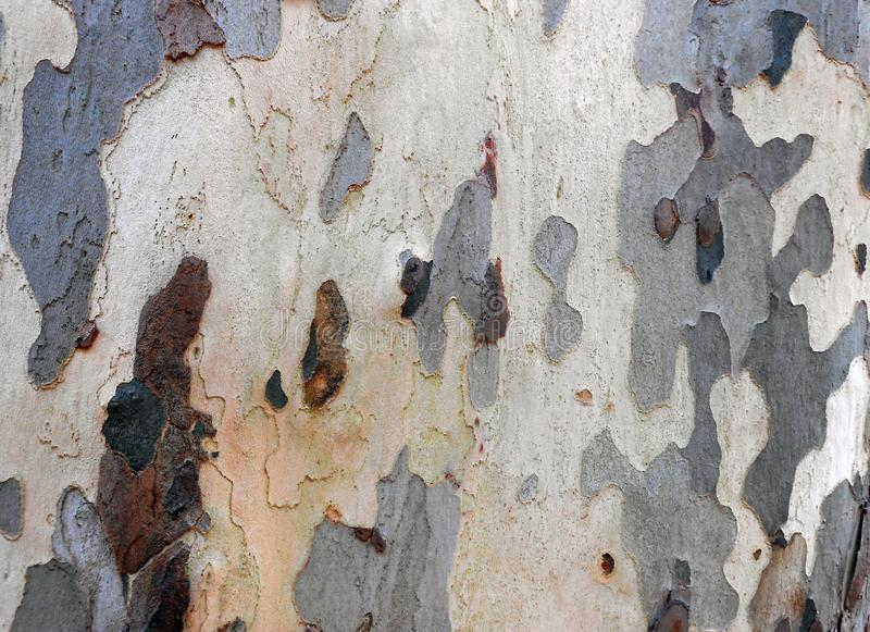 Strange shapes on a tree. Texture of several barks on a tree royalty free stock image