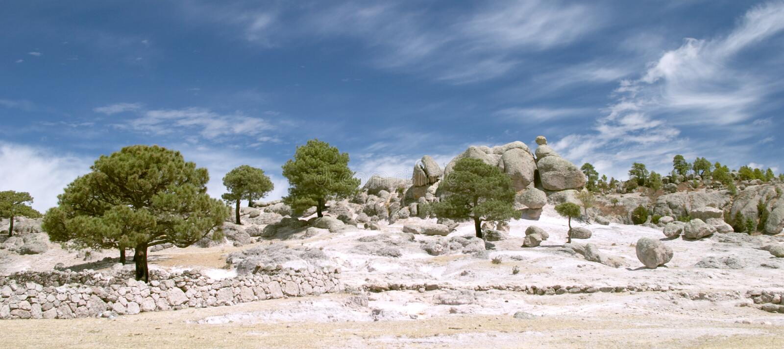 Strange stones and trees royalty free stock images