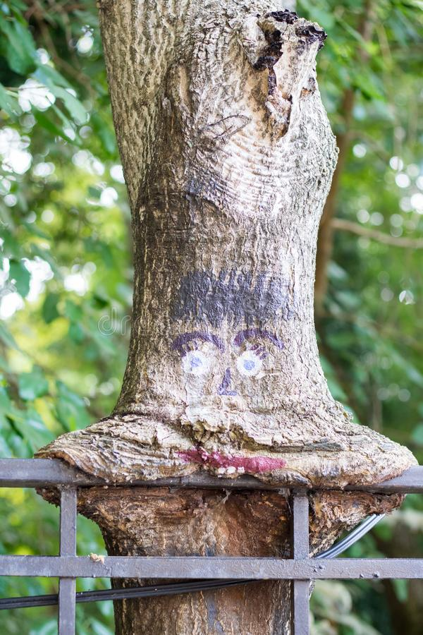 Strange tree with eyes. In the park stock photos