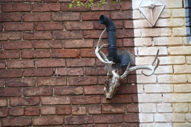Strange wall hanging stock photography