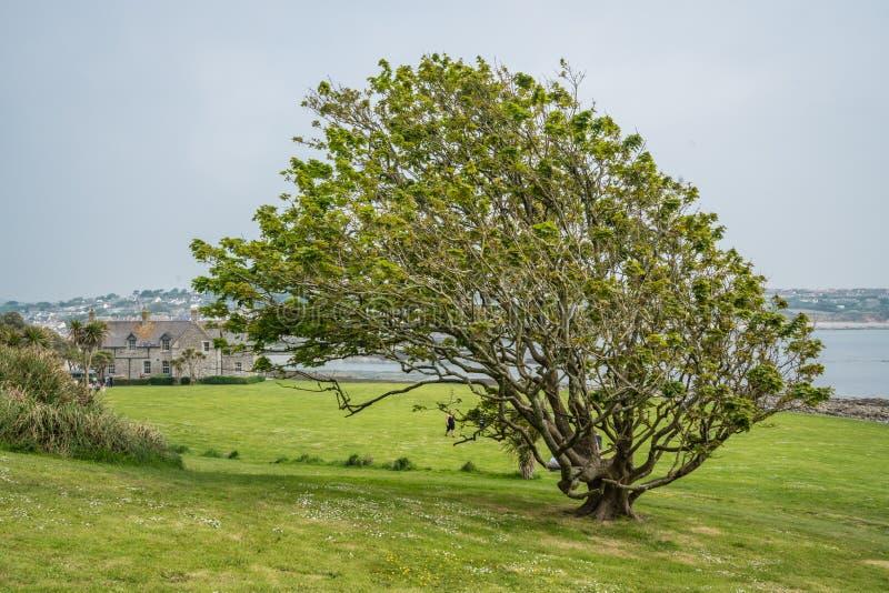 Strangely shaped tree stock images