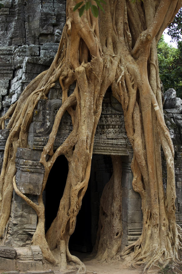 Free Strangler Fig On Temple Entrance Door Stock Photos - 17276853