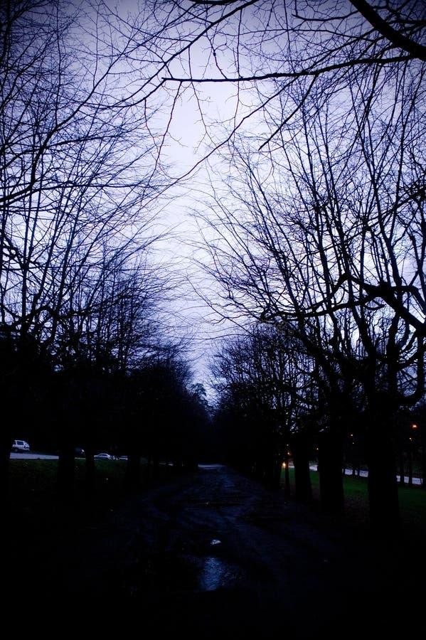 straszna avenue, fotografia royalty free