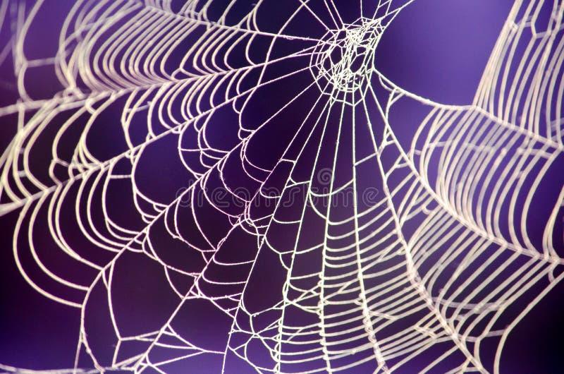 Straszna pająk sieć przeciw purpurowemu tłu zdjęcia royalty free