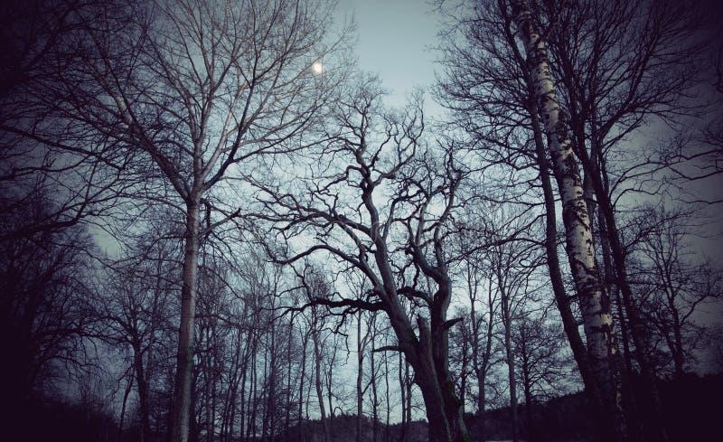 Straszni drzewa zdjęcie stock