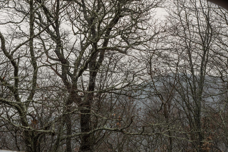 Straszni drzewa wzdłuż Błękitnego grani Parkway w opóźnionym spadku obrazy royalty free