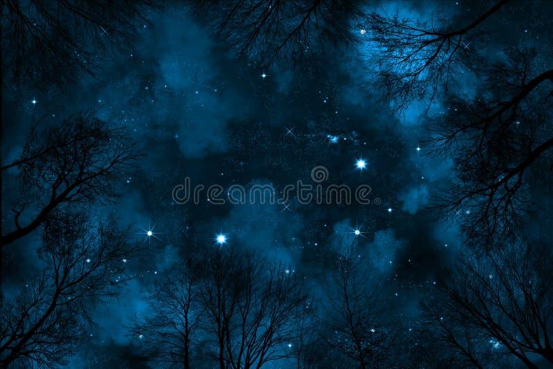 Straszni niskiego kąta widoku synkliny drzewa gwiaździsty nocne niebo z błękitną mgławicą obraz royalty free