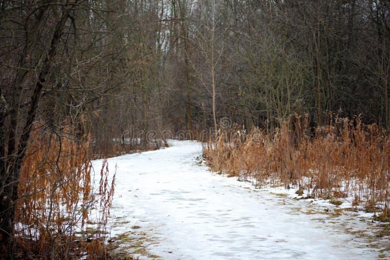 Straszni zim drewna wlec przerażających drzewa w Michigan fotografia stock