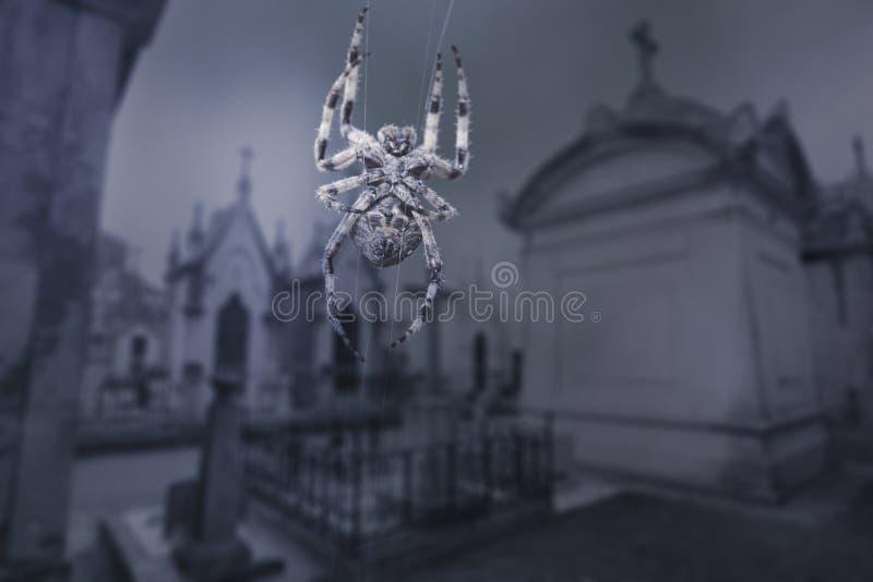 Straszny cmentarniany pająk obrazy stock