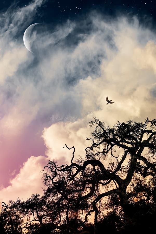 Straszny dąb i księżyc obrazy royalty free