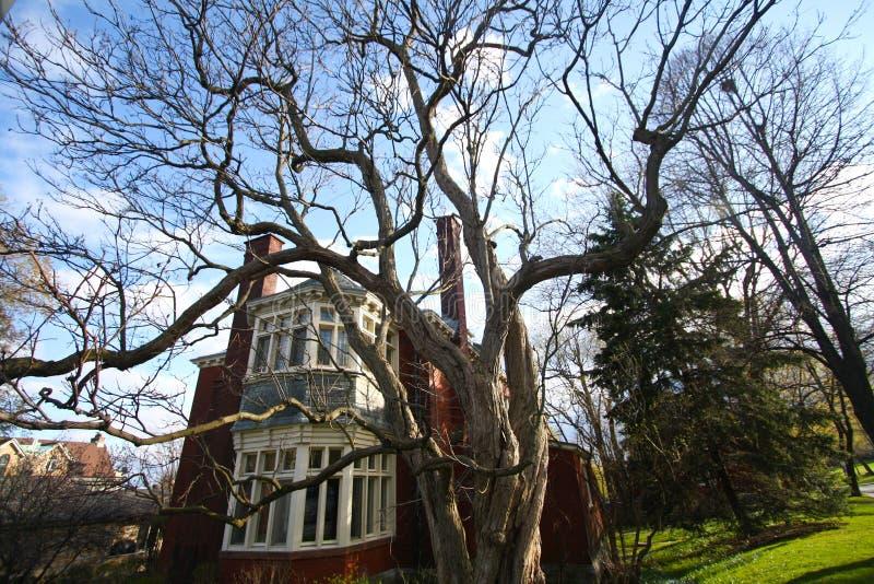 Straszny Drzewo obrazy stock