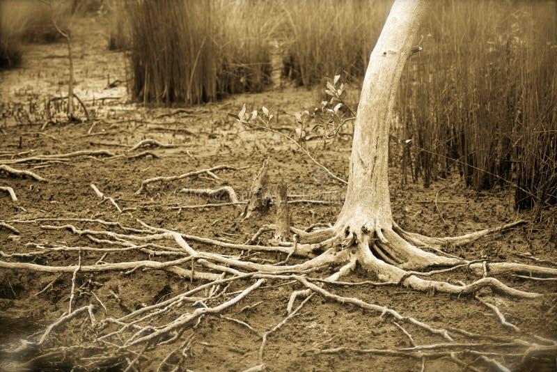Straszny drzewo fotografia royalty free
