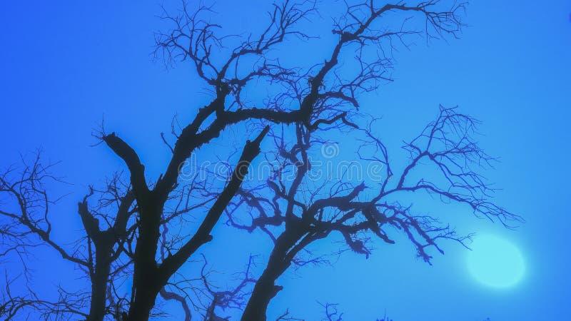 straszny drzewo fotografia stock