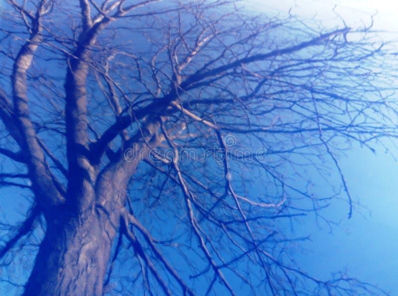 Straszny drzewo w burzy zdjęcie royalty free