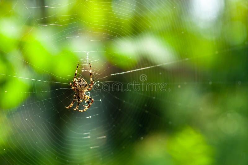 straszny duży pająk sieć na rozmytym tle i zieleni lub ogródu zdjęcia stock