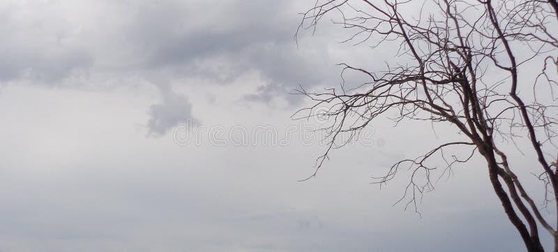 Straszny Halloweenowy Dębowy drzewo Przeciw Złowieszczemu nieba Quercus fotografia royalty free