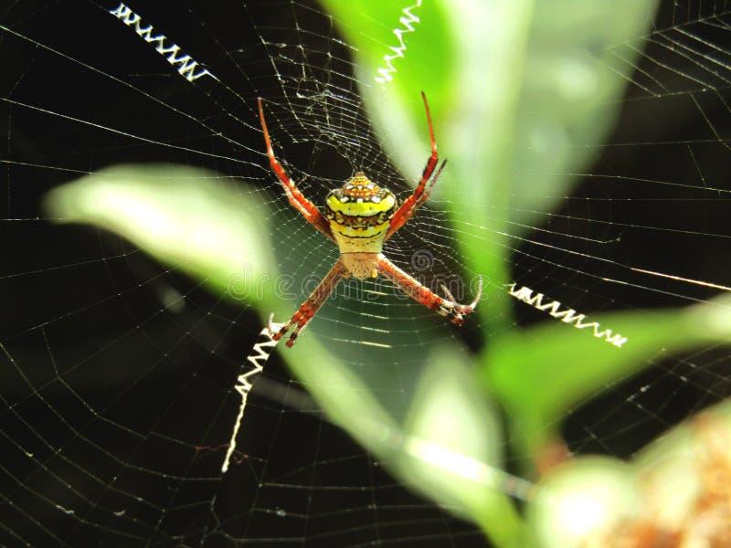 Straszny pająk obraz stock