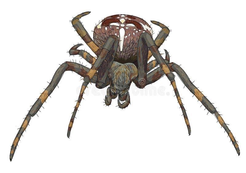 Straszny portreta pająk. ilustracji