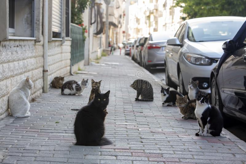 Strat cats in street. Outdoor pet animal.  royalty free stock photos
