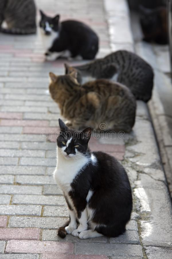 Strat cats in street. Outdoor pet animal.  stock photography