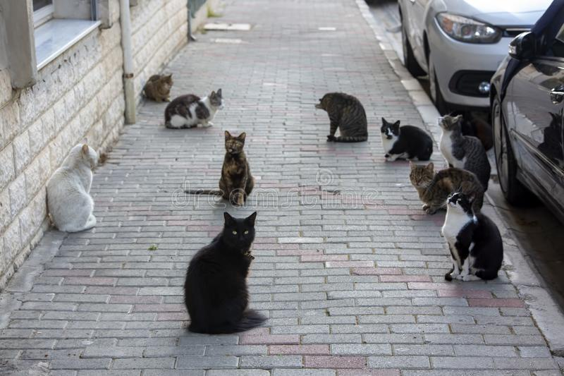 Strat cats in street. Outdoor pet animal.  royalty free stock images