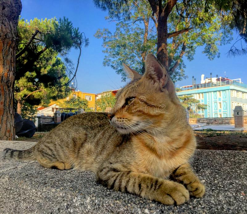 Stray cat portrait. Strat stray cat portrait pet royalty free stock photography