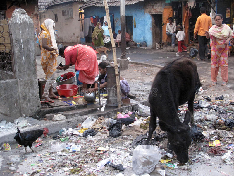 Straten van Kolkata Dieren in afvalhoop stock foto