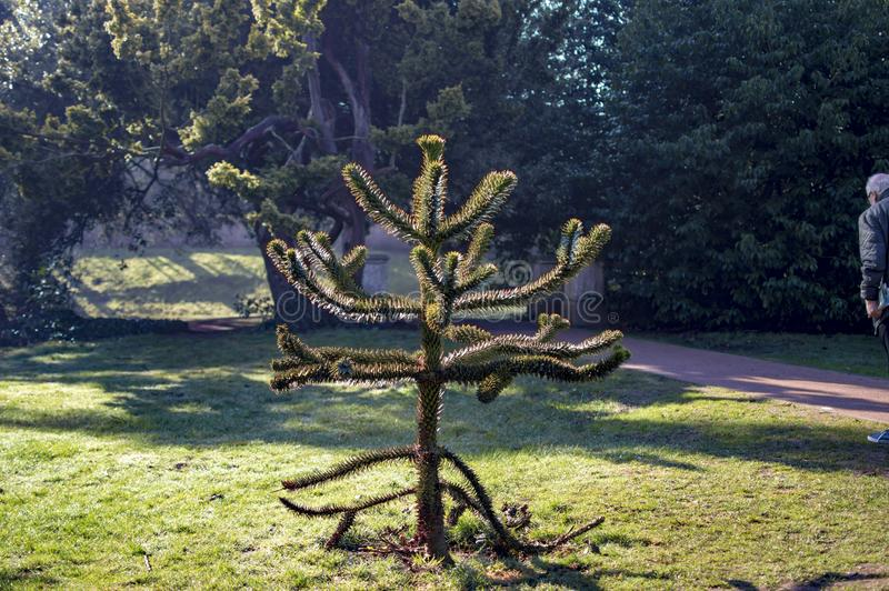 Stratford park with trees and stems with coniferous forest stock image