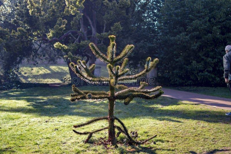 Stratfordpark met bomen en stammen met naaldbos stock afbeelding