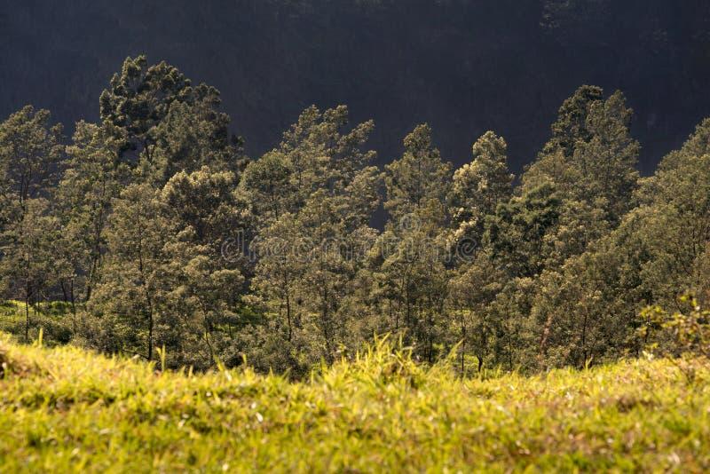 Strati dei paesaggi tropicali immagine stock