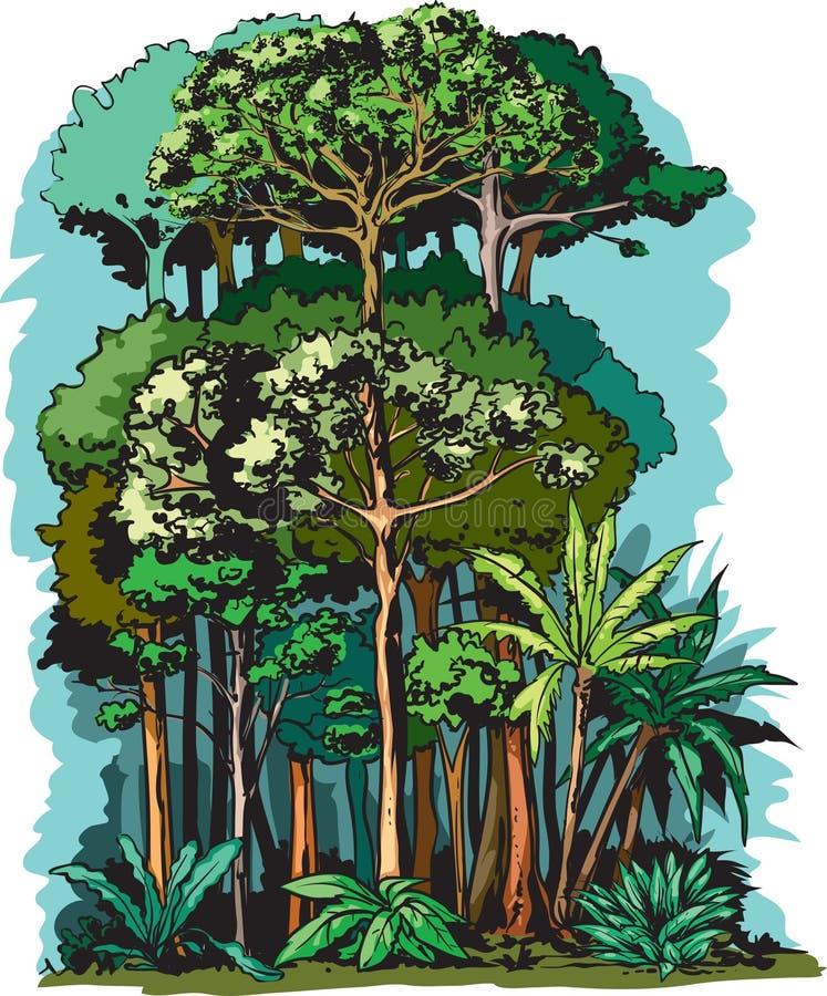 Strati della foresta pluviale illustrazione di stock