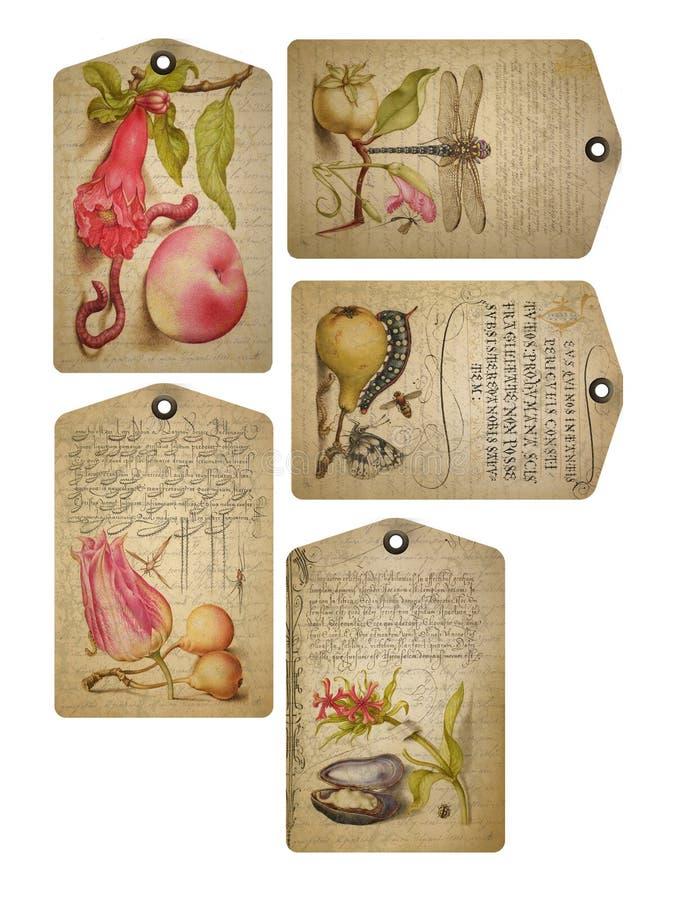 Strato stampabile dell'etichetta - frutta d'annata e flora - etichette floreali - calligrafia - Flourish - etichette del collage  illustrazione vettoriale