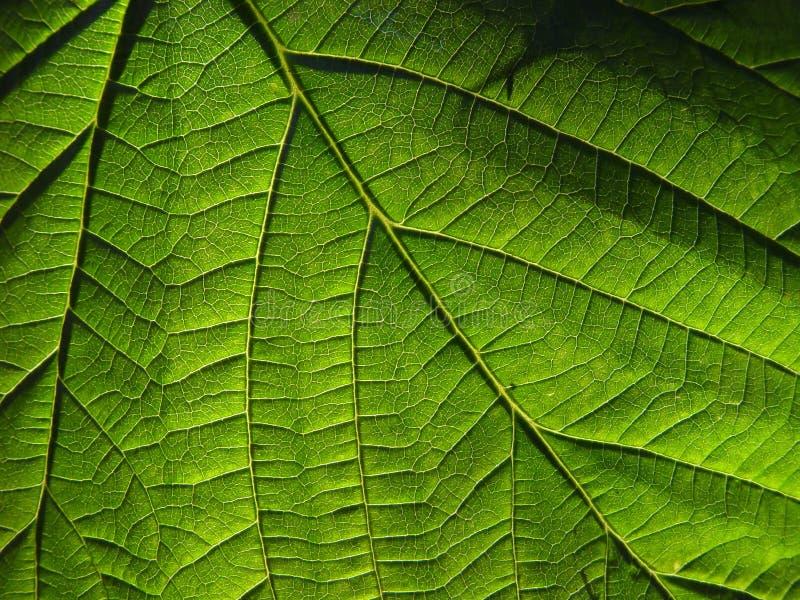 Strato verde fotografia stock