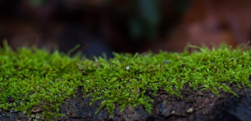 Strato verde di muschio fotografia stock libera da diritti