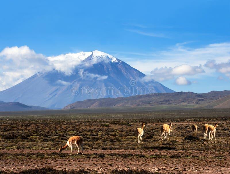 Stratovolcano El Misti, Arequipa, Перу стоковая фотография