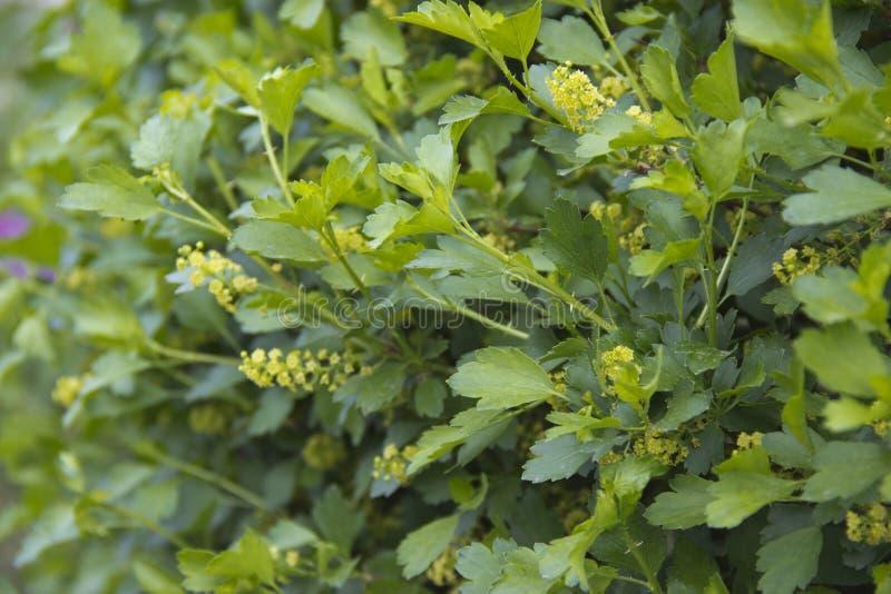 Strauch mit gelben Blumen im Tageslicht lizenzfreies stockfoto