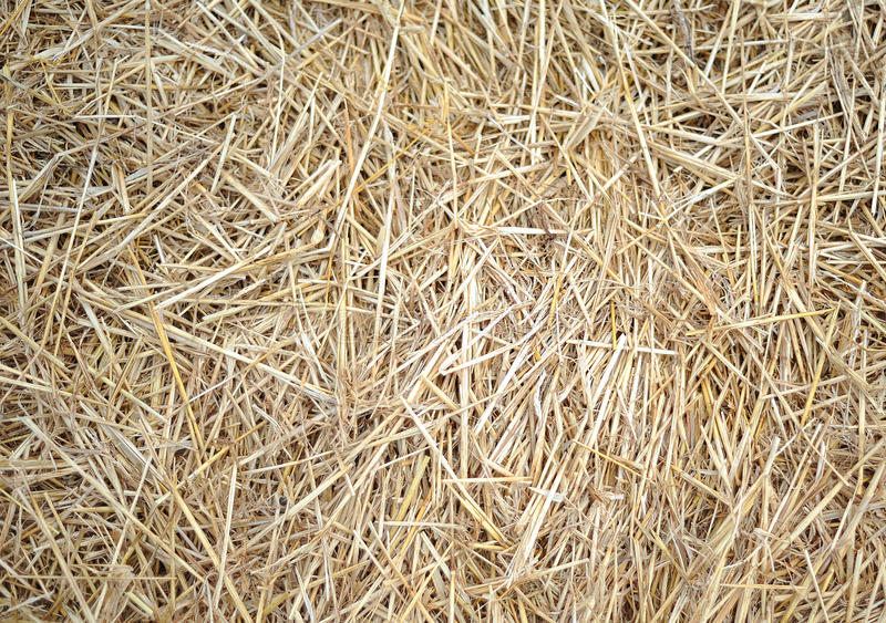 Download Straw stock image. Image of straw, feed, animal, background - 24227975