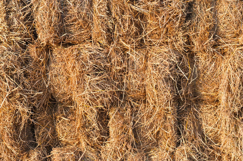 Download Straw background stock image. Image of autumn, cutting - 23516785