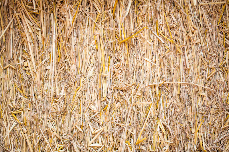 Download Straw background stock photo. Image of grass, agricultural - 37837244