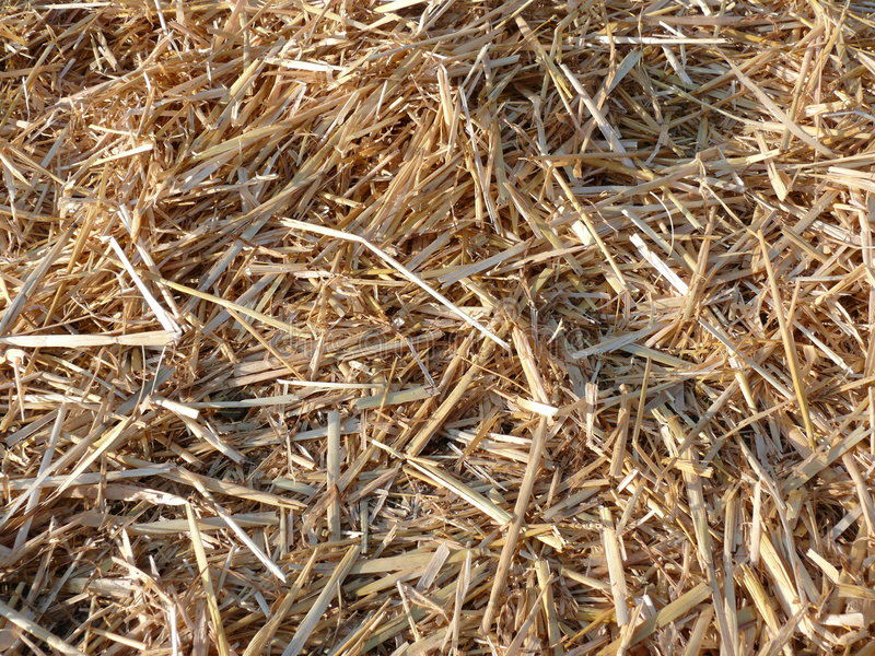 Download Straw background stock photo. Image of plain, straw, short - 4195260