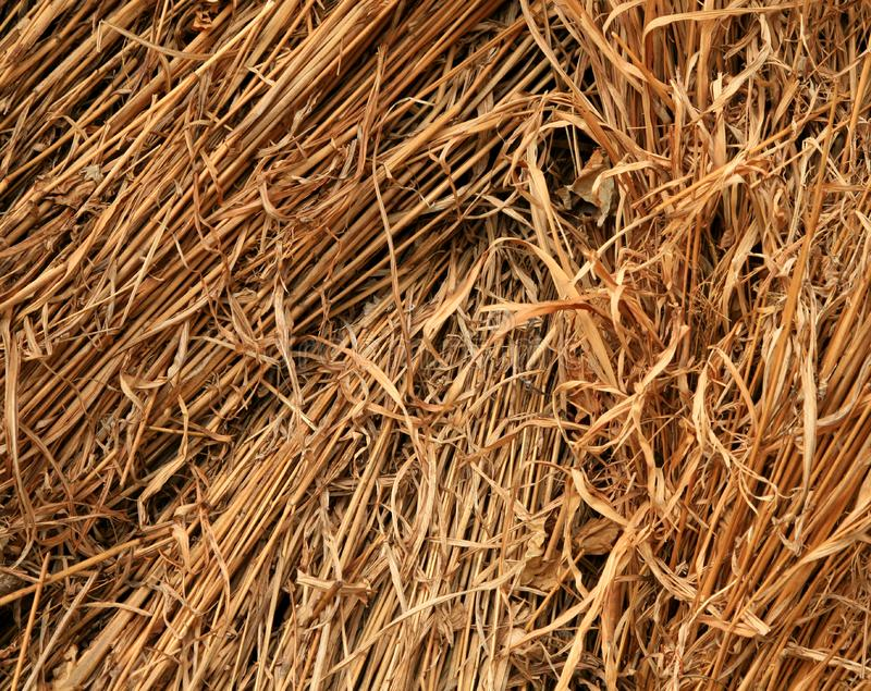 Download Straw background detail stock photo. Image of textured - 5431988