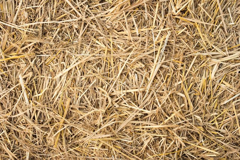 Straw Background Texture royalty-vrije stock fotografie
