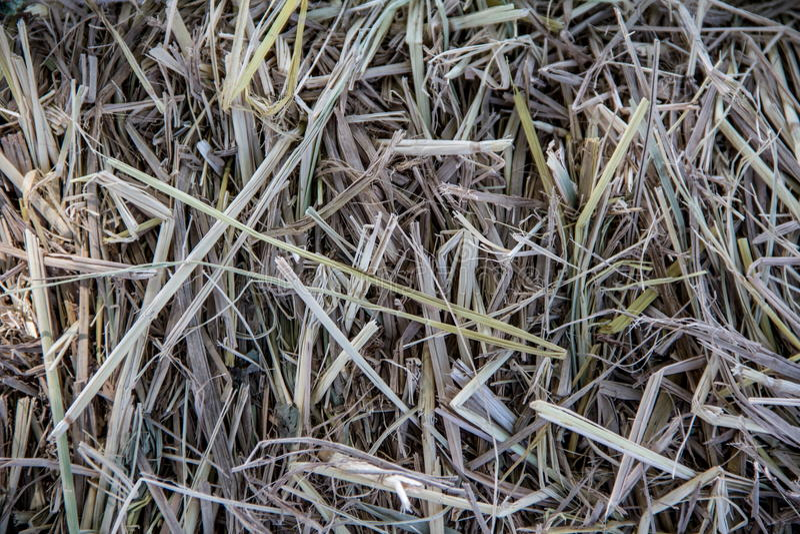 Straw Background Texture royalty-vrije stock foto's