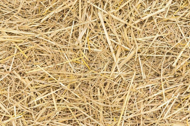 Straw background stock photos