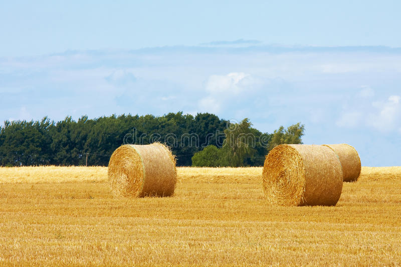 Download Straw bale stock photo. Image of roll, farmland, plants - 25232428